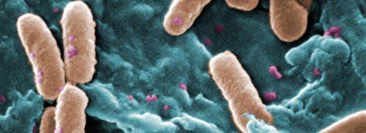 pseudomonas aeruginosa risarcimento